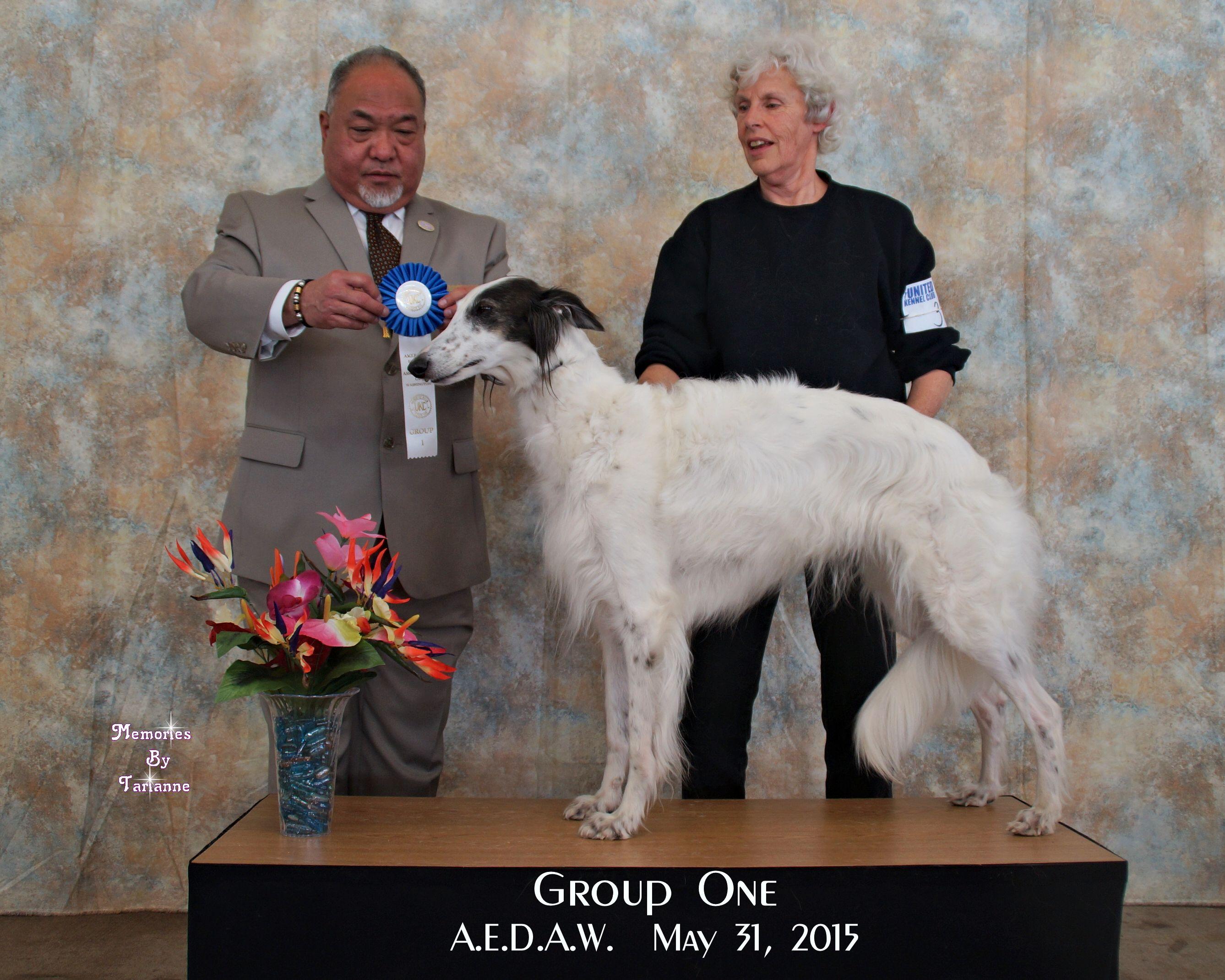 Bali Winning the Sighthound group 05/31/2015